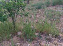 تركيب جميع انواع الاشجار مثل لوز و زيتون و اشجار اخره
