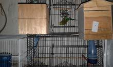 عصافير بقليوب للبيع