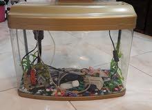 حوض سمك جديد لون ذهبي مع الميز ألمنيوم صاجي فصال .