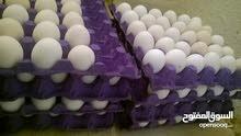 بيض بلدي وفيومي مخصب للفقاسات