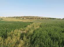 اراضي زراعيه