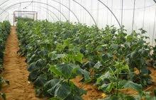 مزرعة 88  فدان للبيع في الفيوم نيلي وتقبل التجزئه