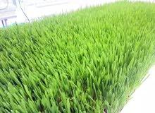 الحل المثالي لتوفير اعلاف المواشي غرف استنبات الشعير