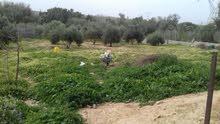 مزرعه هكتار وربع مثمره ومرويه للبيع بالخمس من مكتب العايب