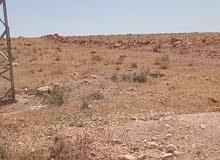 ارض بعل بمزارع مدينة القطيفة.