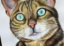 looking for female bengal cat or savannah cat