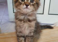 kittens baby