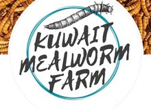 Mealworms & Superworms / قبابي و عتول