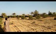 ارض زراعيه للبيع على طريق مصر اسكندريه الصحراوي