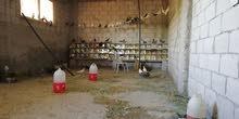 موجود حمام بلدي شغال نخب من 30 إلى 35 جوز