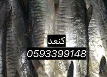 سمك طازج من الشرقيه لرياض