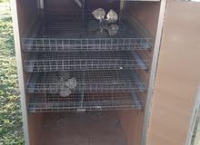 حضانة دجاج محلية الصنع قلابه تحمل 400 بيضه