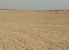 ارض زرعه لبيع علي طريق الفيوم مساحه 20 فدان