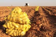 مزرعة 3300 فدان  مزروعة محاصيل و  بطاطس للبيع