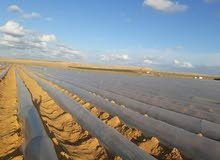 40 فدان ارض زراعيه مميزة للبيع