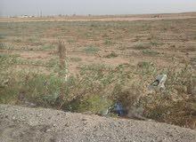 طعة ارض للبيع على مساحة 100 فدان قابله لتجزئه حتى 5 افدنه ارض المساحه بالكامل