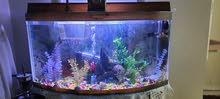 حوض سمك للبيع متر ارتفاع 50