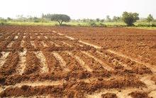 مزرعة 20 فدان للبيع بمنطقة الحامول