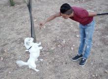 كلب زينه عمر سنه ونص