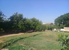 مزرعة 3 هكتار موقع الزاوية (بئر ترفاس)