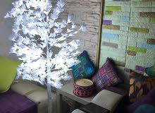 آشجار زينة للمنزل و الحديقة