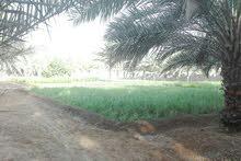 مزرعه على الشارع العام في صحم مجز الصغرى للبيع