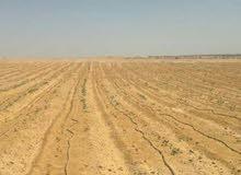 للبيع 600 فدان بجوار أرض نقابة الفلاحين