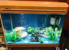 حوض الأسماك  fish aquarium