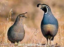 مطلوب طيور من نفس النووع الي موجود عنده الرجاء الاتصال