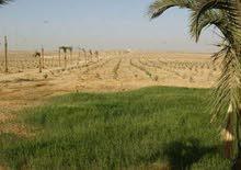 علي بعد 35 كم من ميدان الرماية استثمر في ارض زراعية