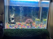 سلام عليكم حوض سمك قياس 60×40 مع 3 أسماك وحده قرش وثنين صغار الحوض كامل من كل شي