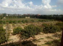 شقة نص تشطيب للبيع-حي السلام-طريق المطار