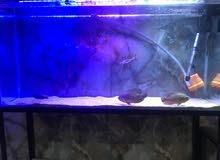 حوض سمك 220لتر مع السمك اقرأ الوصف