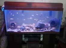 حوض سمك كبير بحالة الوكالة للبيع بسعر مغري