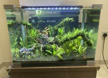 Planted Aquarium/ Fish Tank