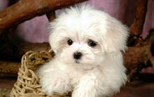 الاسم مودي كلب