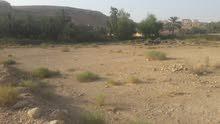 أرض للإيجار سنوي  وادي لبن