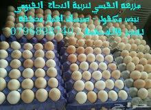 بيض فيومي مخصب من مزرعه القيسي
