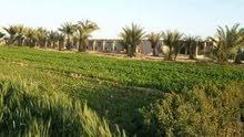 فرصه مزرعة 5 فدان ري نيلي غمر 220000