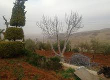 مزرعه على طريق شفابدران بيرين جرش 6دونمات