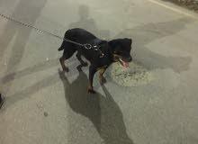 كلبه روت وايلر 8 شهور