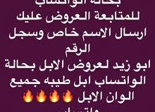 يوجد حلال كفوو من خلفات ولقحات وبكار وفيه بيع ولله الحمد *