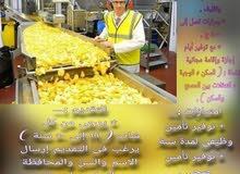 بحث عن عمال إنتاج لمصانع المواد الغذائية في العاشر من رمضان