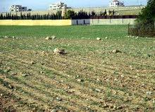 قطعة أرض جنوب عمان للبــيع على طريق المطار منطقة حوارة، طريق مادبا الغربي