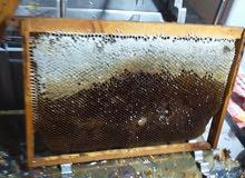 يوجد عسل ربيعي..وعسل سدر 2020 مضمون وخالي من الادويه...خادمه بروحي