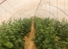 مزرعه 2 فدان مصوبة للبيع