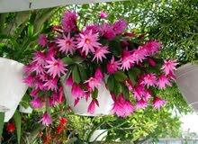 نباتات داخلية جميلة