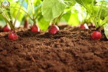مطلوب مهندس زراعي للعمل في مشتل زراعي