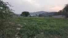 ارض زراعية للبيع بصك شرعي إلكتروني بمحافظه محايل عسير بمنطقه الحماطه