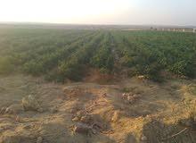 ارض مساحه 30 فدان للبيع